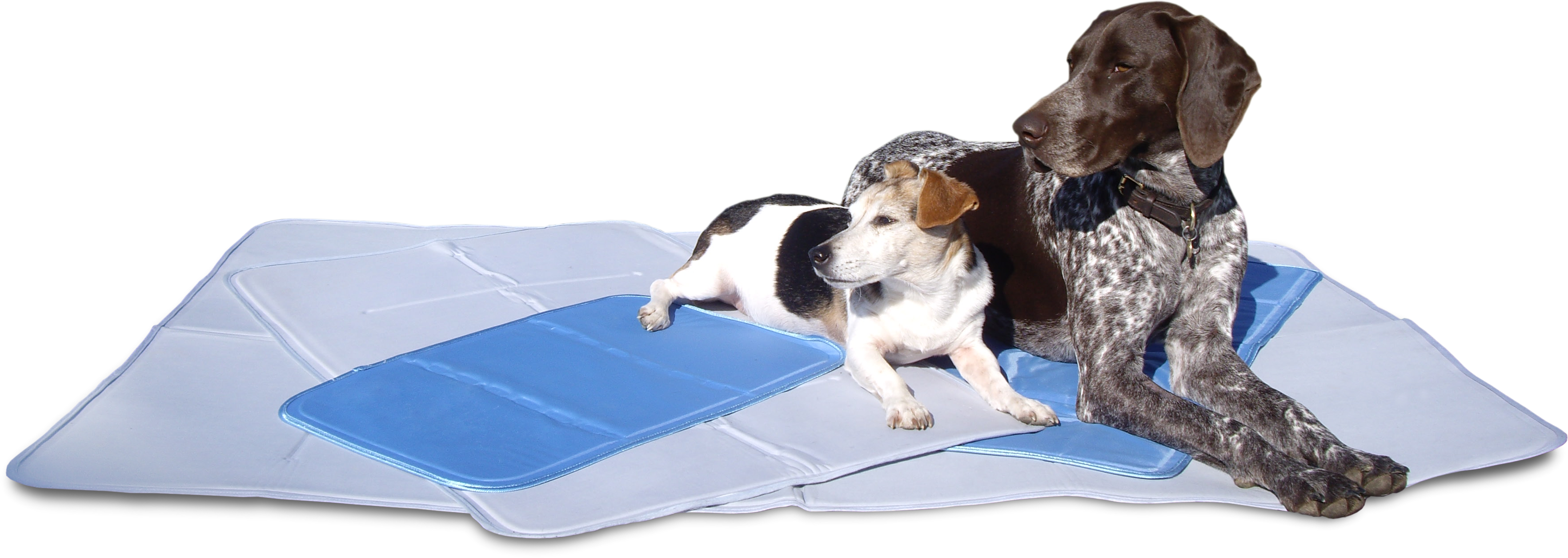 sap background product puppy the yellow pet pad training count pads shop bamboo green mats